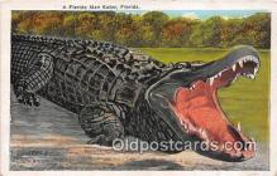 yan000027 - Florida, USA  Postcard Post Card