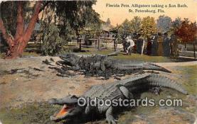 yan000029 - St Petersburg, FL, USA  Postcard Post Card