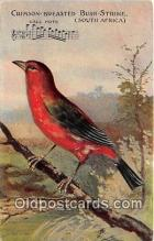 yan010045 - South Africa Crimson Breasted Bush Strike Postcard Post Card