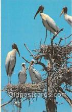 yan010048 - Everglades National Park, FL, USA Wood Ibis Rookery Postcard Post Card