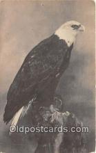 yan010059 - Central Noth America Bald Eagle Postcard Post Card