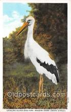 yan010064 - South Africa Catalina Island Bird Park, Maguiri Stork Postcard Post Card
