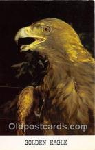 yan010065 - Golden Eagle Postcard Post Card