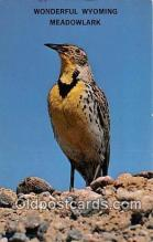 yan010069 - Wyoming, USA Meadowlark Postcard Post Card