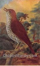 yan010073 - Wood Thrush Postcard Post Card