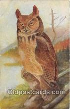 yan010078 - Harvey Great Horned Owl Postcard Post Card