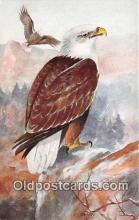 yan010079 - Harvey Bald Eagle Postcard Post Card