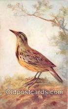 yan010083 - Meadow Lark Postcard Post Card