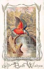 yan010089 - Kingfisher Postcard Post Card