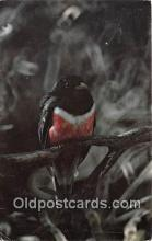 yan010100 - Southeat Arizona, USA Coppery Tailed Trogon Postcard Post Card