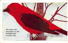yan010114 - Canada Scarlet Tanager Postcard Post Card