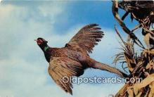 yan010120 - Pheasants Postcard Post Card