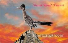 yan010124 - Desert Road Runner Postcard Post Card