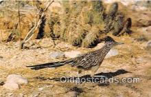 yan010127 - Road Runner Postcard Post Card