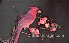 yan010140 - Ithaca, NY, USA Cardinal Postcard Post Card