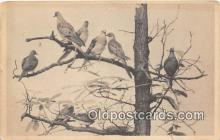 yan010141 - Chicago, IL, USA Passenger Pigeon, Field Museum of Natural History Postcard Post Card