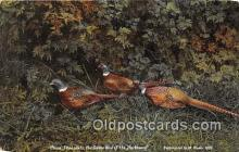 yan010144 - Northwest China Pheasants Postcard Post Card