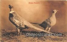 yan010145 - Chinese Pheasants Postcard Post Card