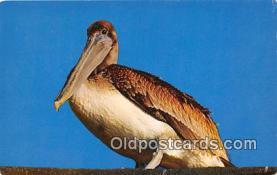 yan010147 - Dixon Lanier Merritt Pelican Postcard Post Card