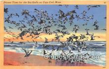 yan010150 - Cape Cod, Mass, USA Sea Gulls Postcard Post Card