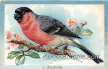 yan010171 - Bullfinch Postcard Post Card