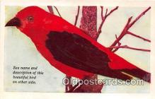 yan010177 - Des Moines, Iowa, USA Scarlet Tanager Postcard Post Card