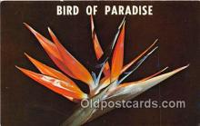 yan010178 - South Africa Bird of Paradise Postcard Post Card