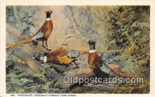 yan010182 - Oregon, USA Pheasants Postcard Post Card