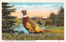 yan010183 - Washington, USA Chinese Pheasants Postcard Post Card