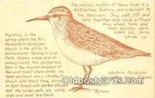 yan010198 - By Irene Western Sandpiper Postcard Post Card