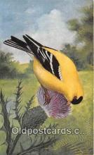 yan010201 - Goldfinch Postcard Post Card