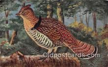 yan010214 - Ruffed Grouse Postcard Post Card