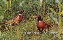 yan010217 - South Dakota, USA Pheasant Hunting Postcard Post Card