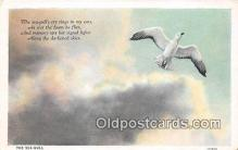 yan010218 - Sea Gull Postcard Post Card
