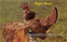 yan010222 - Partridge Ruffed Grouse Postcard Post Card