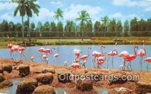 yan010231 - Hialeah Race Course, USA Flamingos Postcard Post Card