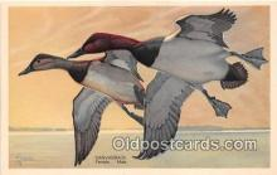 yan010235 - Alaska, Oregon, Nevada Canvasback, Male & Female Postcard Post Card