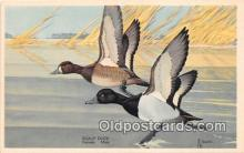 yan010236 - North Carolina, USA Scaup Duck, Female & Male Postcard Post Card