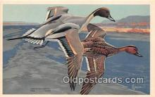 yan010237 - Alaska, Pennsylvania American Pintail Postcard Post Card