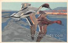 yan010238 - British Columbia, New York American Pintail Postcard Post Card