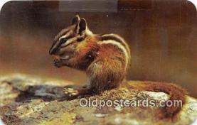 yan020012 - Clatworthy Colorvuis Chipmunk Postcard Post Card