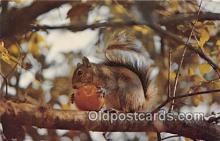 yan020015 - Squirrel Postcard Post Card