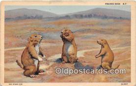 yan020019 - Prairie Dog Postcard Post Card