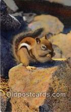 yan020034 - Chipmunk Postcard Post Card
