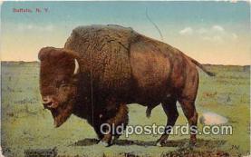 yan030002 - New York, USA Buffalo Postcard Post Card