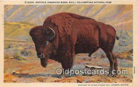 yan030008 - Yellowstone National Park, USA Buffalo, American Bison Postcard Post Card