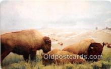 yan030013 - Denver Museum of Natural History, CO, USA American Bison Postcard Post Card