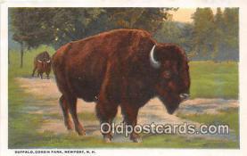yan030017 - Newport, NH, USA Buffalo, Corbin Park Postcard Post Card