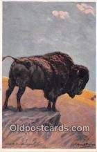 yan030035 - Bison Postcard Post Card