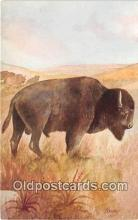 yan030036 - American Buffalo Postcard Post Card